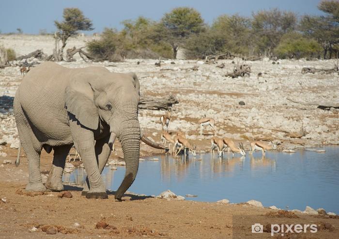 Vinyl-Fototapete Afrikanischen Elefanten an einem Wasserloch in Namibia - Afrika