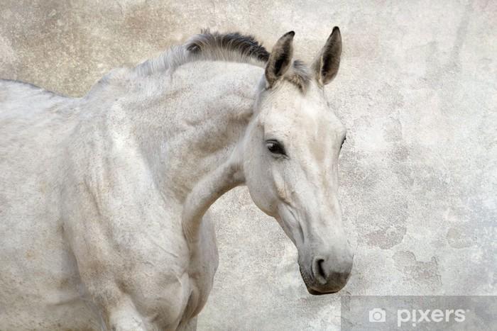 68c89082dffab Vinyl-Fototapete Portrait der schönen weißen Pferd gegen die Wand -  Säugetiere