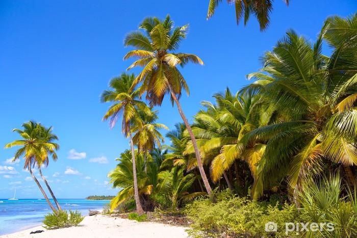 Fototapeta winylowa Tropikalna plaża z palmami w Morzu Karaibskim - Palmy