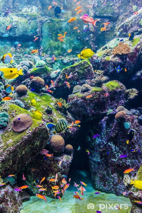 Papier peint vinyle Les poissons d'aquarium tropical sur un récif de corail - Récif de corail