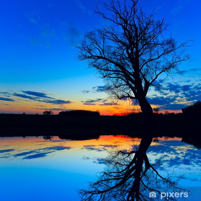 Fototapeta winylowa Stare drzewa w nocy - Drzewa