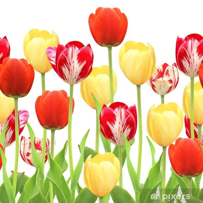 Plakat Bez szwu granicy z tulipanów - Tematy