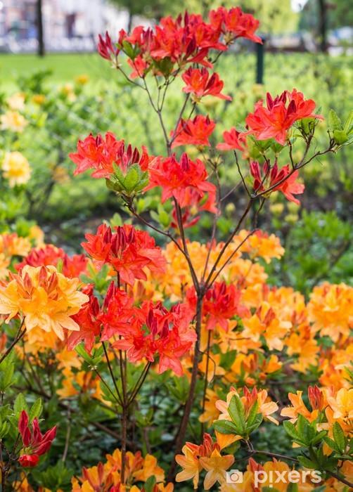 Pixerstick Sticker Ontluikende Japanse azalea in het voorjaar - Seizoenen