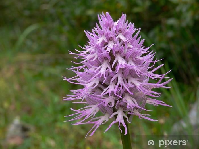 Sticker Pixerstick Orchidea Orchis italica - Fleurs