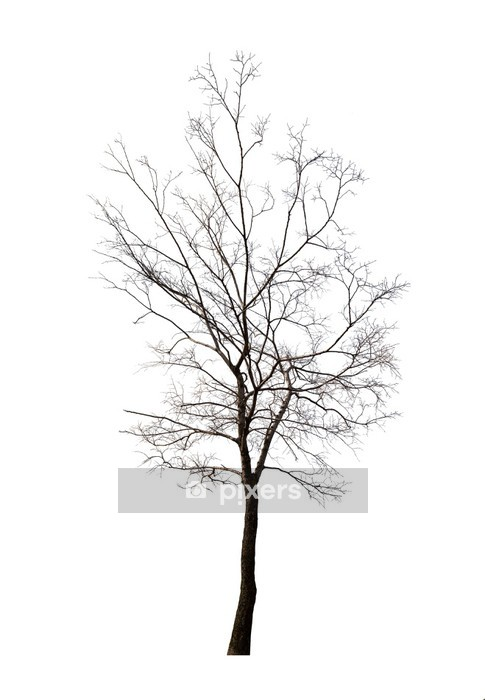6907855f464b isolated winter dark bare tree Wall Decal • Pixers® • We live to change
