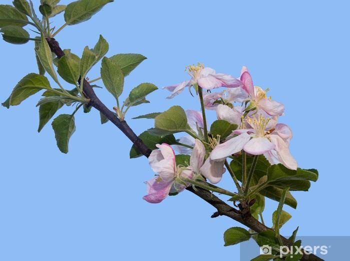 Nálepka Pixerstick Jabloňový květ - Roční období