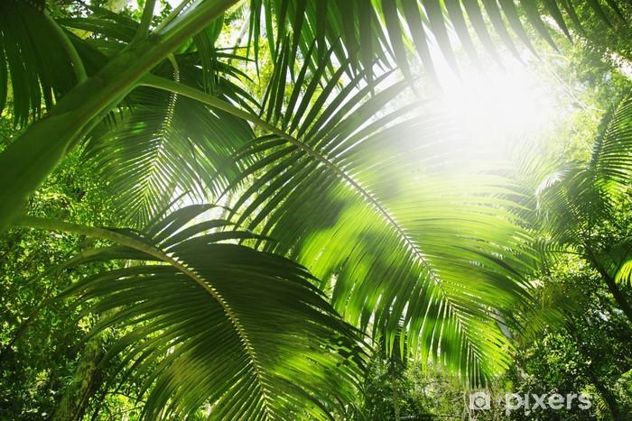 Papier peint lavable Forêt tropicale - Thèmes
