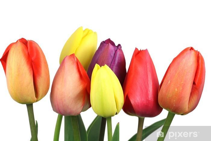 Nálepka Pixerstick Kytice ze sedmi květů tulipán na bílém pozadí - Květiny