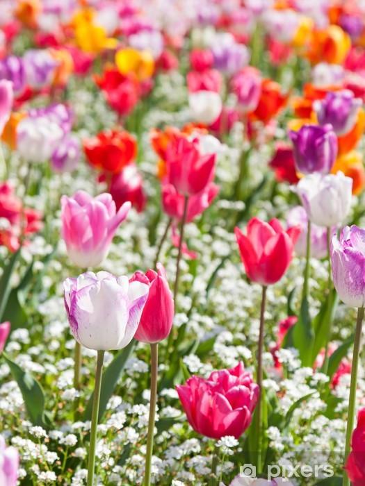 Vinyl-Fototapete Tulpen - Blumen