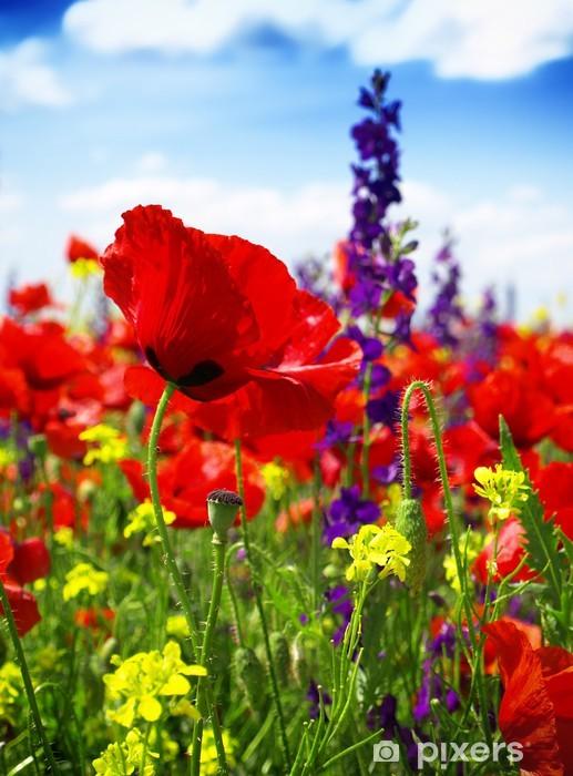 Vinilo Pixerstick Amapolas en flor en el prado salvaje - Temas