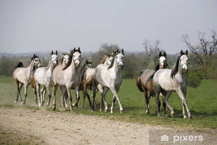 35 araber pferde bilder  besten bilder von ausmalbilder