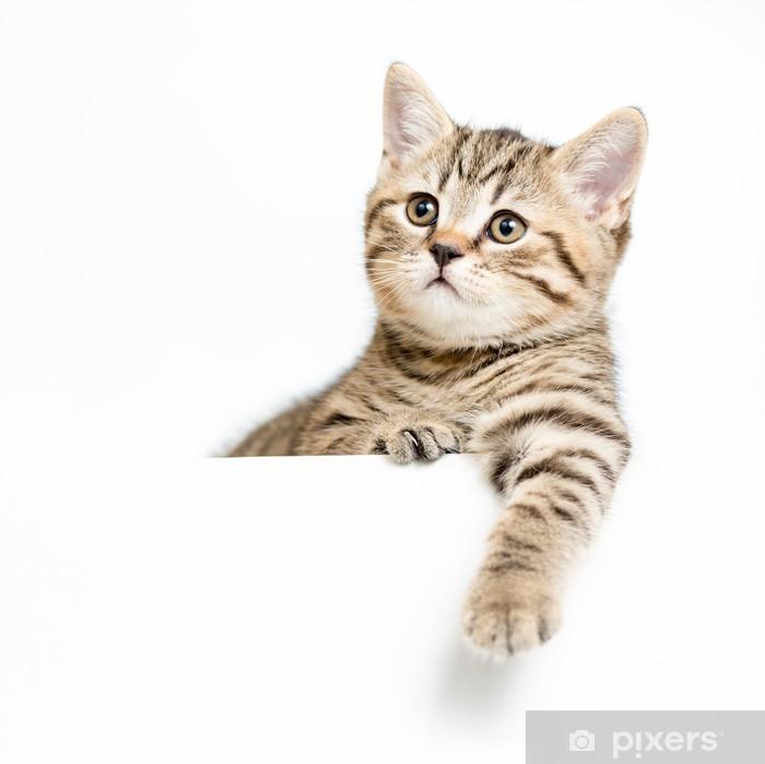 Plakat Kotek za białego tablica samodzielnie - Ssaki