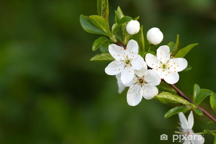 Fotomural Arbol Con Hermosas Flores Blancas Pixers Vivimos Para