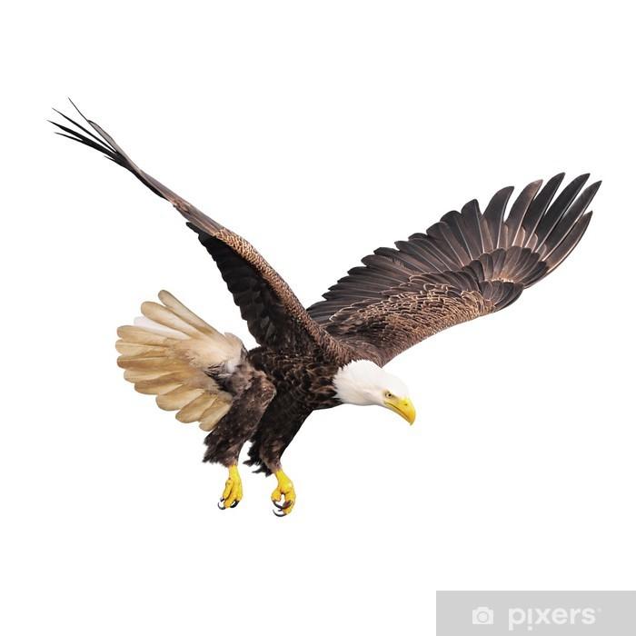 Vinilo Pixerstick Águila calva aislada en el fondo blanco. • Pixers ...