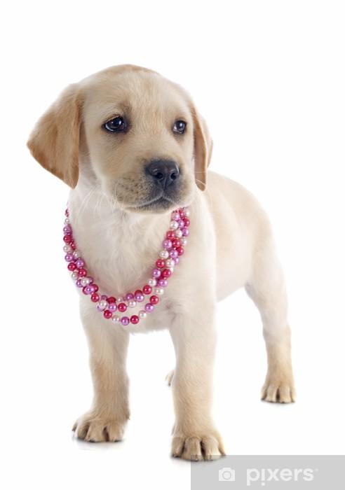 Vinyl Fotobehang Puppy - labrador retriever - Zoogdieren