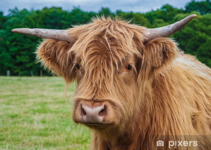 Sticker Pixerstick Highland Vache - Mammifères