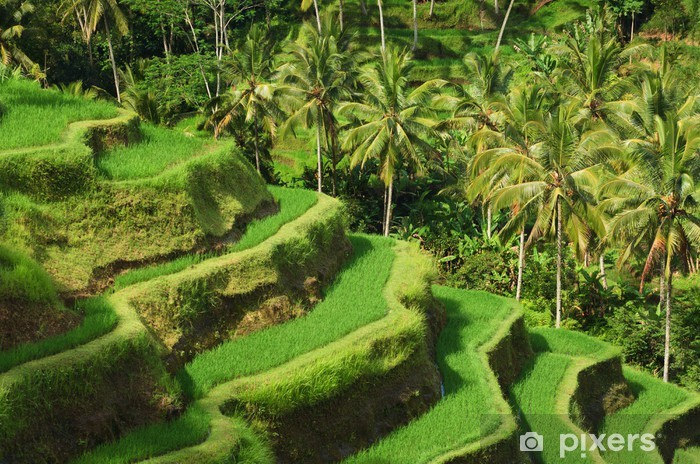 Terrace rice fields, Ubud, Bali, Indonesia Vinyl Wall Mural - Asia