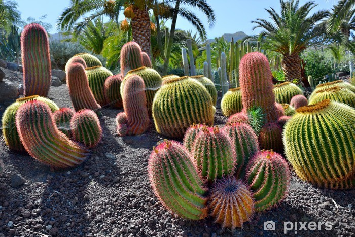 Cactus Garden Sticker Pixers We Live To Change
