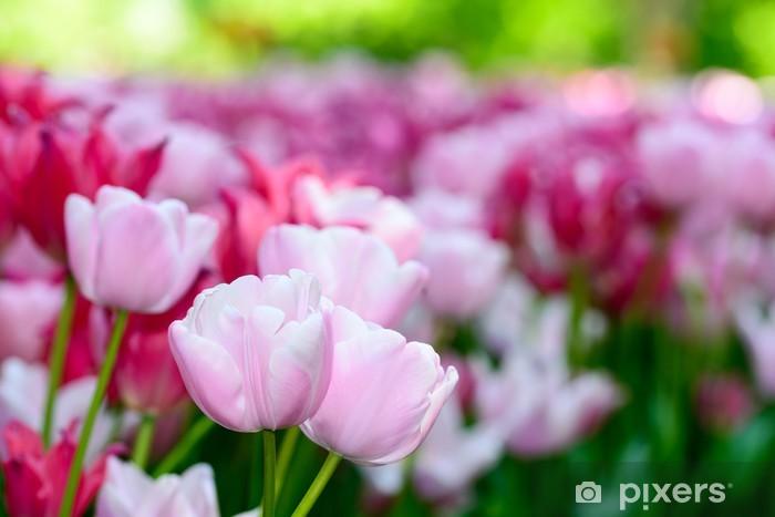 Fiori Tulipani.Tulipani Tardivi Rosa A Fiore Semplice Wall Mural Pixers We