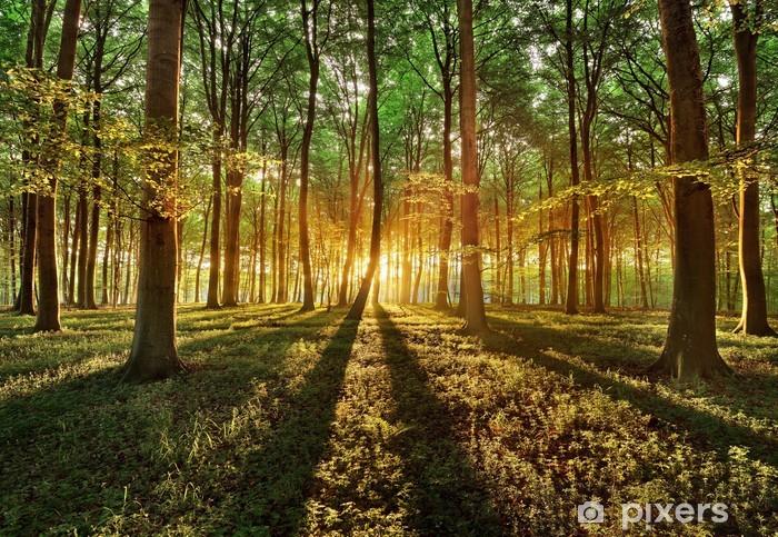 Fototapeta samoprzylepna Wiosenny las -
