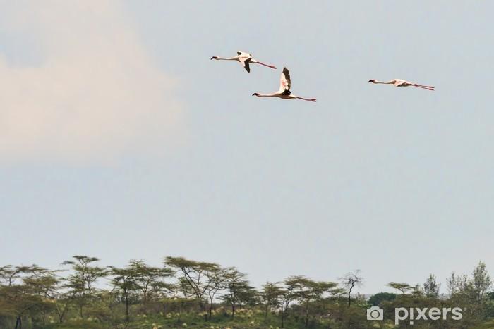 Vinyl Fotobehang Tansania-Flamingo-11050 - Vogels