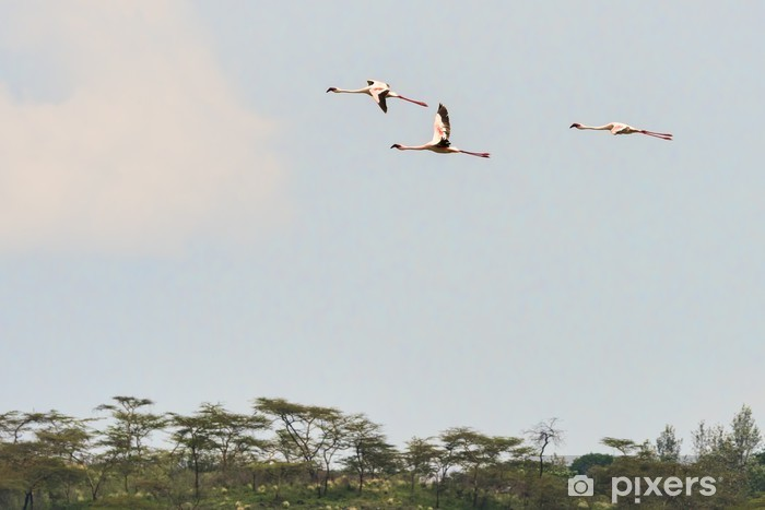 Naklejka Pixerstick Tanzania Flamingo 11050 - Ptaki