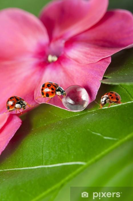 Vinilo Pixerstick Mariquitas entre cada gota de agua sobre una flor - Otros Otros