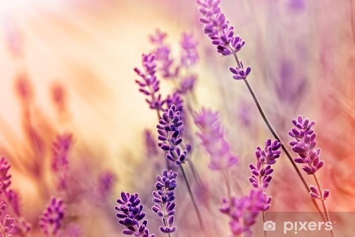 Deursticker Soft focus op mooie lavendel en zonnestralen - zonnestralen - Kruiden