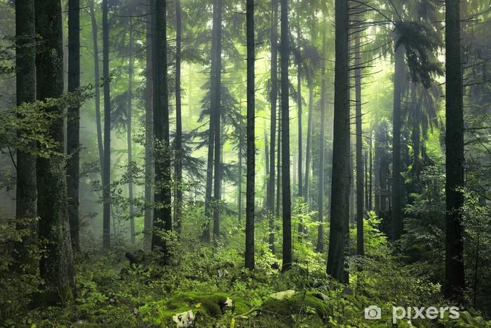 Afwasbaar Fotobehang Mysterieus donker bos - Stijlen