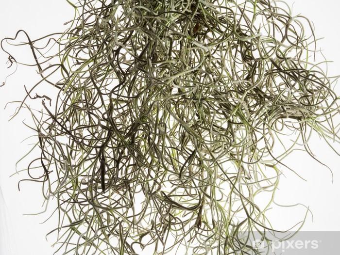 Papier peint vinyle Cheveux Moss - Plantes