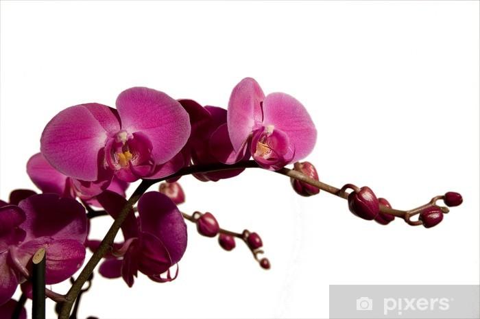 Vinyl-Fototapete Orchidee -