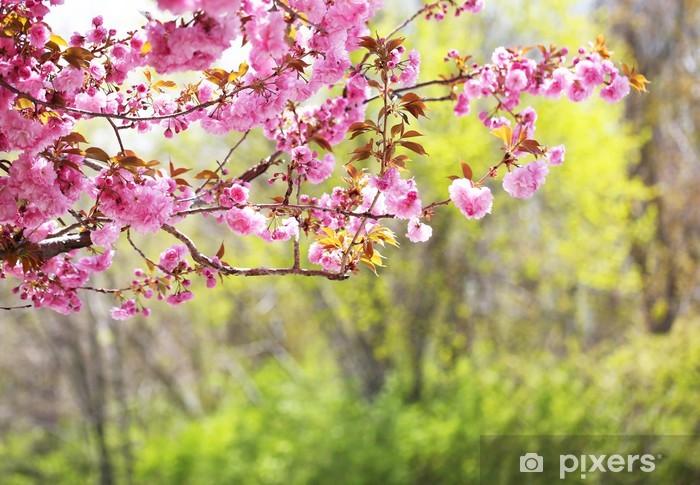 Sticker Pixerstick Sakura. Cherry Blossom dans le printemps - Thèmes
