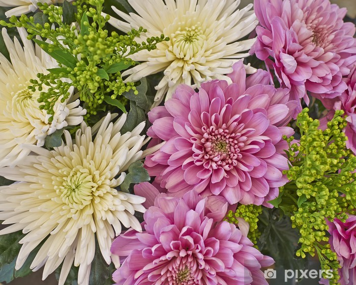 Vinyl Fotobehang Wit en roze chrysant bloemen close-up - Verkoop