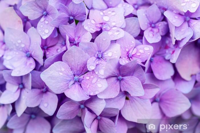 Hydrangea Detail Pixerstick Sticker - Flowers