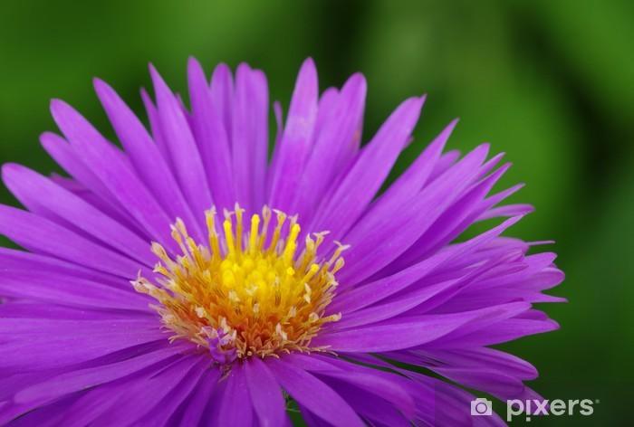 Naklejka Pixerstick Kwiat - Inne Inne
