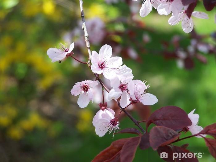 Papier peint vinyle Prunier fleur- - Arbres