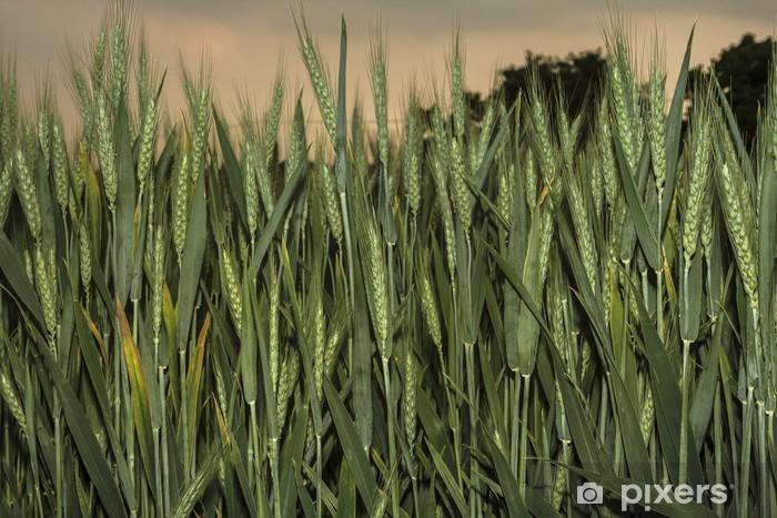 Il grano al tramonto Vinyl Wall Mural - Agriculture