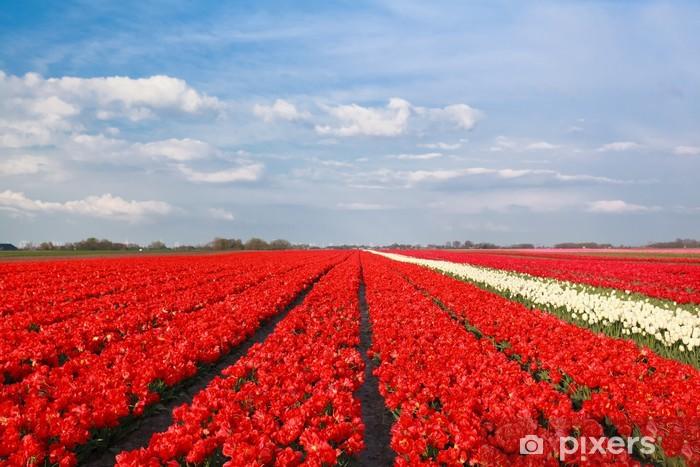 Naklejka Pixerstick Błękitne niebo nad czerwonym polu tulipanów - Pory roku