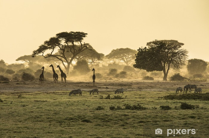 Fototapeta winylowa Sylwetka di żyrafa - Afryka