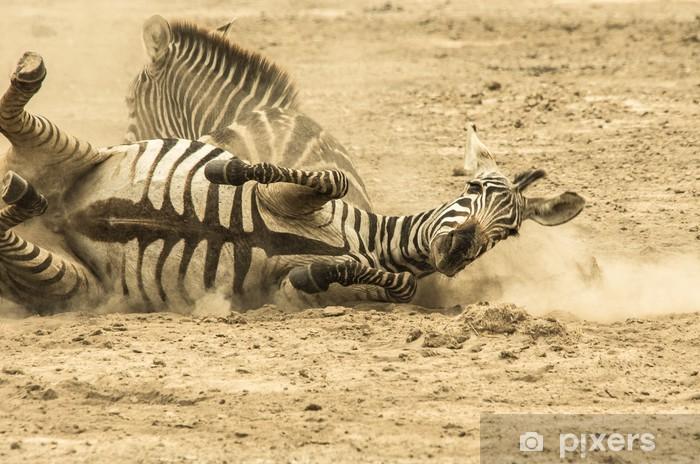 Fototapeta winylowa Zebry w kurzu - Tematy