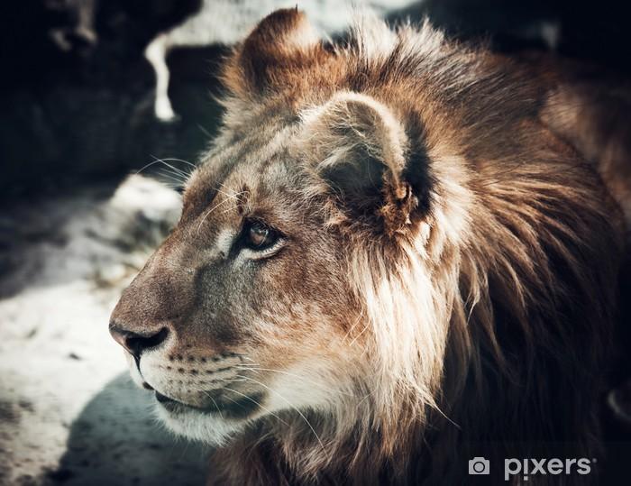 e0a617883511e Papier peint Portrait du roi des bêtes lion • Pixers® - Nous vivons ...