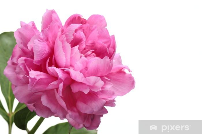 Papier peint vinyle Pivoine rose - Fleurs