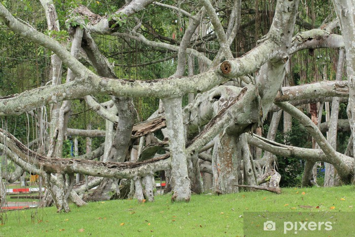 Pixerstick Aufkleber Banyan - Bäume