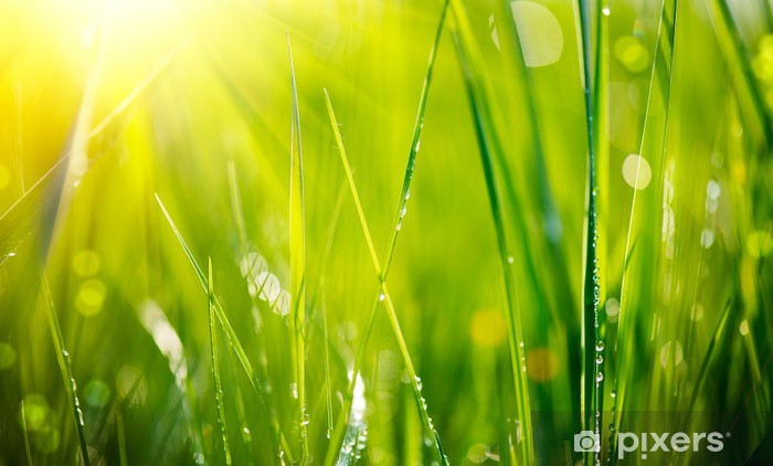 Fresh green grass with dew drops closeup. Soft Focus Pixerstick Sticker - Themes