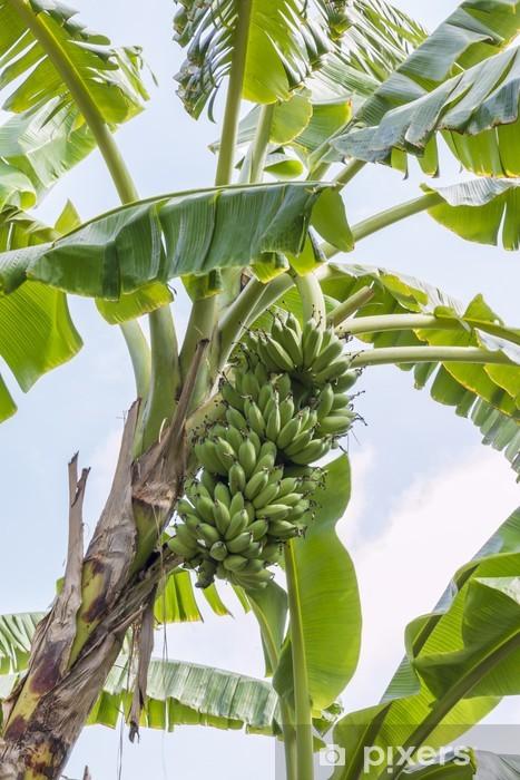 Fototapeta winylowa Banan drzewo - Drzewa