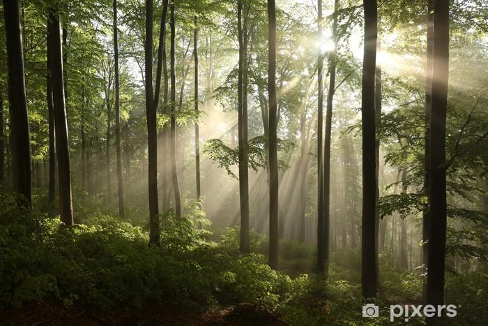 Vinilo para Nevera Bosque de hayas de primavera después de unos días de lluvia en una mañana de niebla - Temas