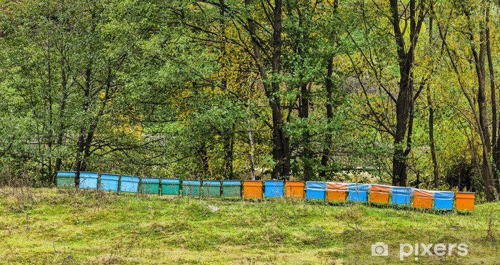 Beehives Vinyl Wall Mural - Forests