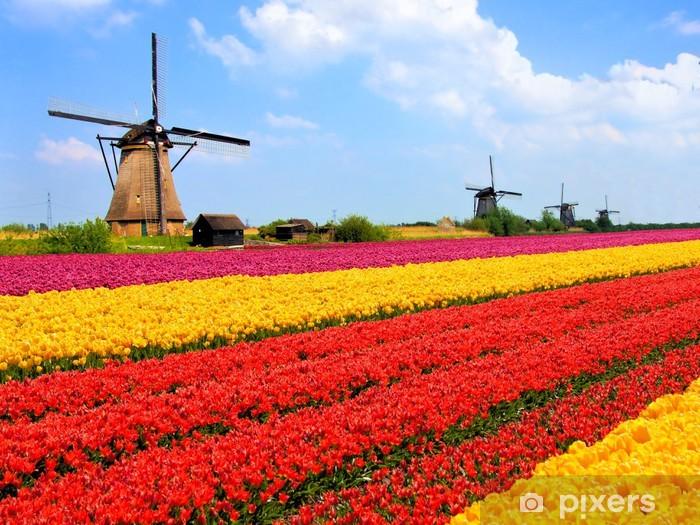 Vinyl Fotobehang Levendige tulpen velden met windmolens, Nederland - Windmolens