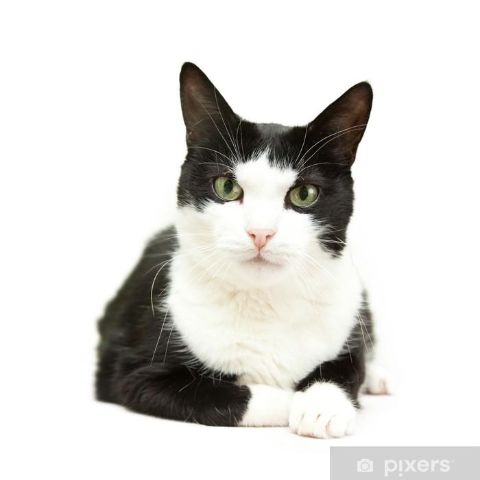 Carta Da Parati Bellissimo Gatto Bianco E Nero Su Sfondo Bianco