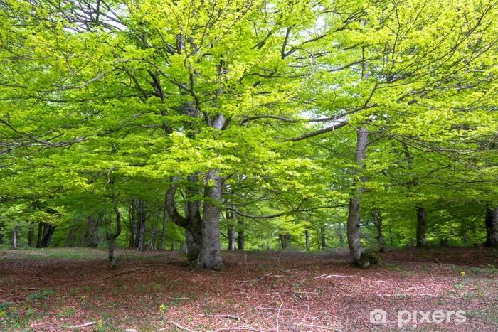 Nálepka Pixerstick Buk lesní, Entzia pohoří, Álava (Španělsko) - Evropa